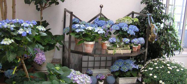 Zimmerpflanzen - Raumbegrünung