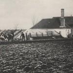 Pflügen mit Ochsengespann ca 1900